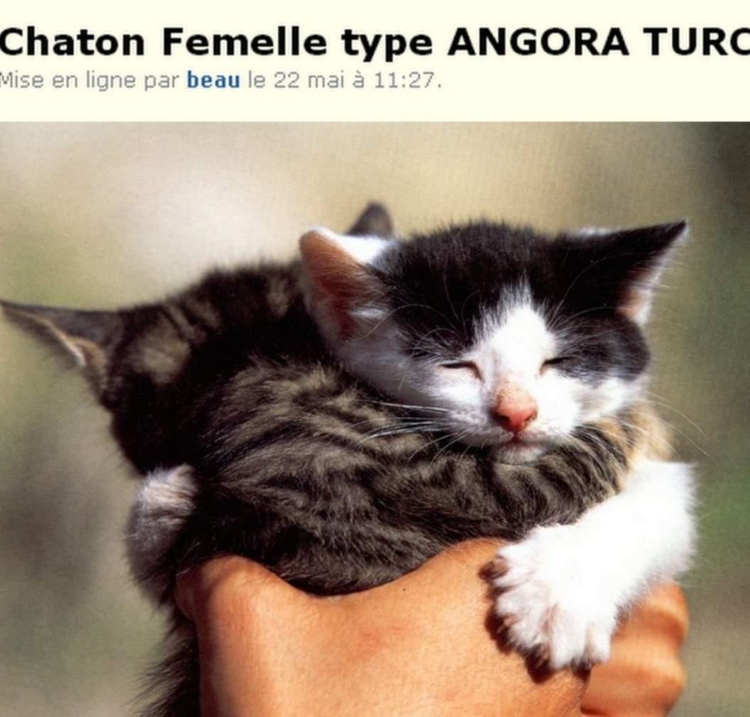 Boncoin Donne Chaton Chatte